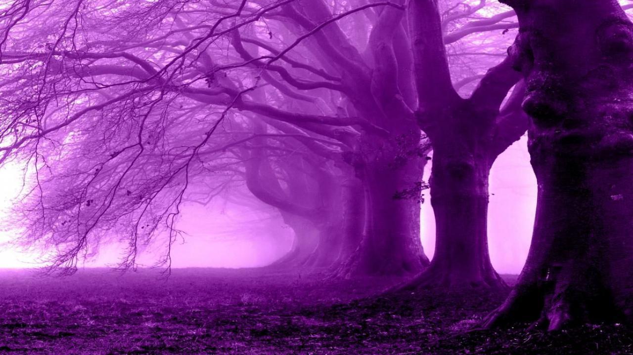 رنگ فوق العاده قشنگ ارغوانی و تاثیر بر روح و روان انسان