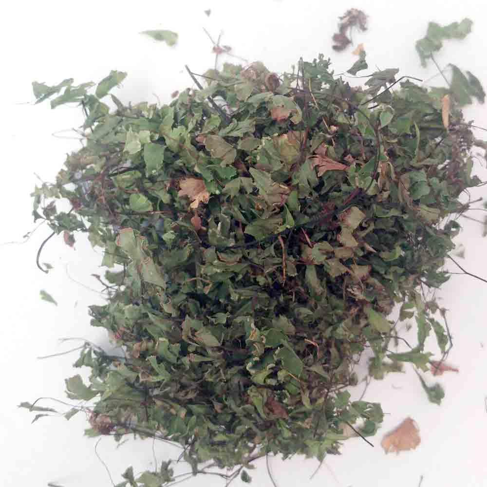 اثرات درمانی گیاه پرسیاوشان در رفع عوارض آسم و تنگی نفس